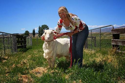 shrek-the-sheep-7