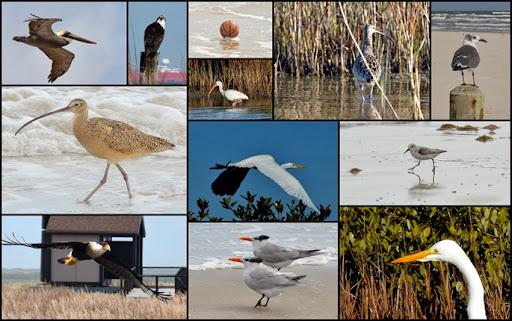 01-17-2014 Padre Island Seashore
