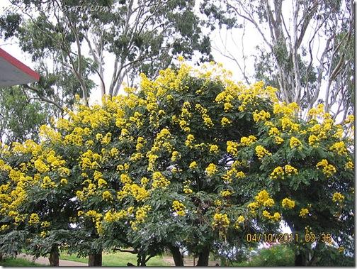 VidyaSury Tree