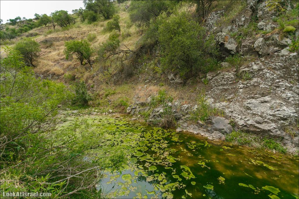 LookAtIsrael.com: Фото-блог о путешествиях по Израилю. Тель Авив, Иерусалим, Хайфа А вот чуть выше уже есть вода. Хоть и застоявшаяся, но лягушек и черепах в ней огромное количество.