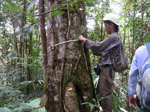 Developing a plant-survey method at Anap-Muput Forest ...