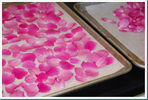 Drying Rose Petals