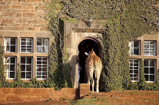 giraffa-manor-2