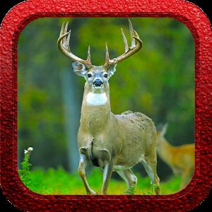 Whitetail Deer Slayer