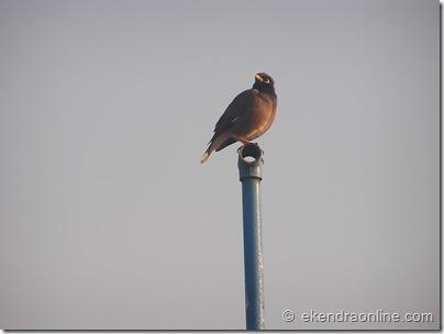 Robin Bird : Leisure pics in Pokhara