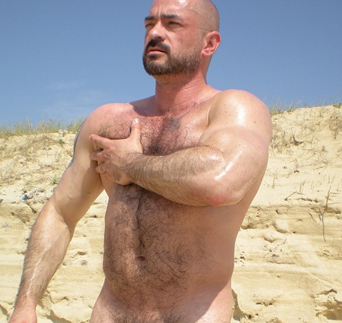 hairy daddybears muscles