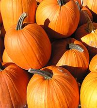 Dietitian Degree Programs Recommend Pumpkin for Peak Nutrition