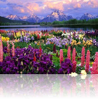 field-of-flowers-02