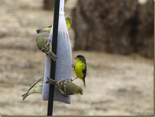 catalina birds and_009
