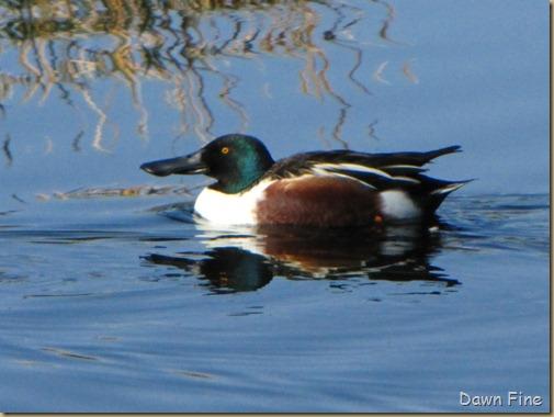 sweetwater wetlands_062