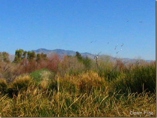 sweetwater wetlands_177