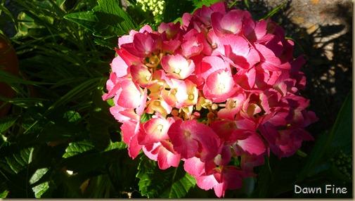 arnd the garden_035