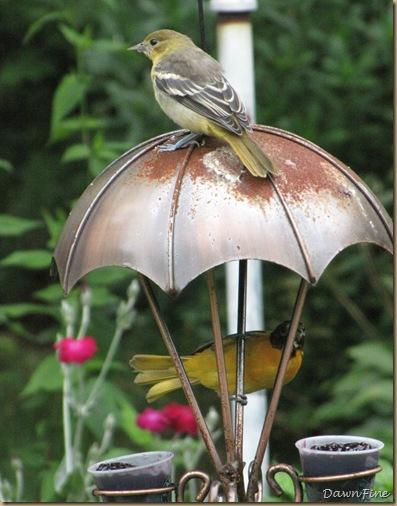 birds at feeder_20090623_003
