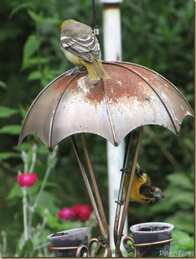 birds at feeder_20090623_005