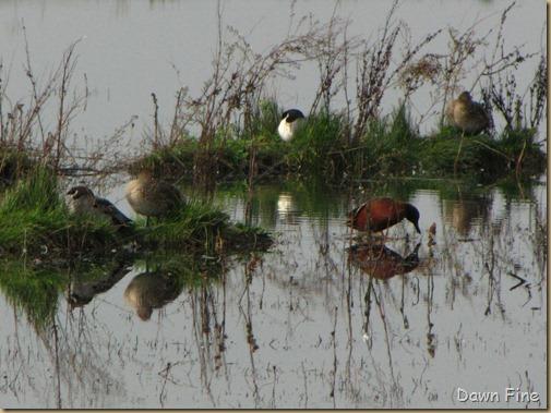 Consumnes birding_046