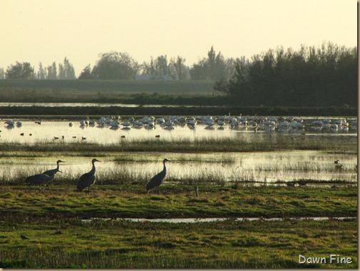 Consumnes birding_167
