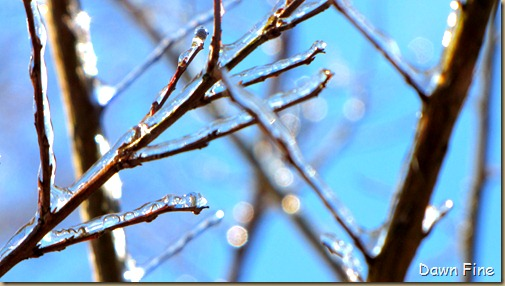 snow and ice_028