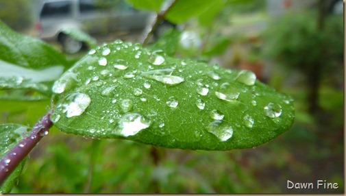Water droplets and flowers_060