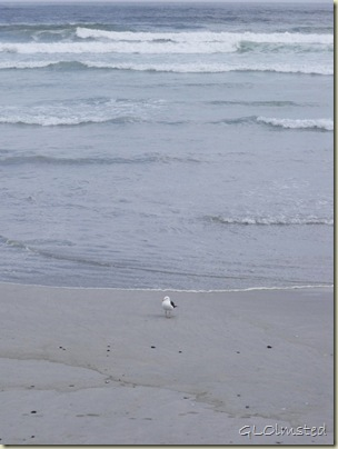 Seagull Grotto Beach Hermanus Western Cape South Africa