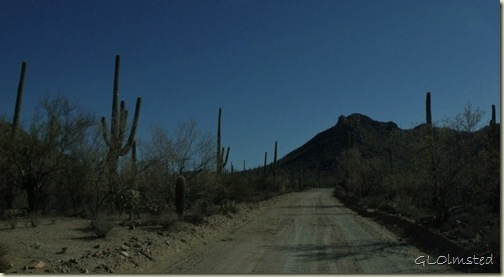 Hohokam Road Saguaro National Park Arizona