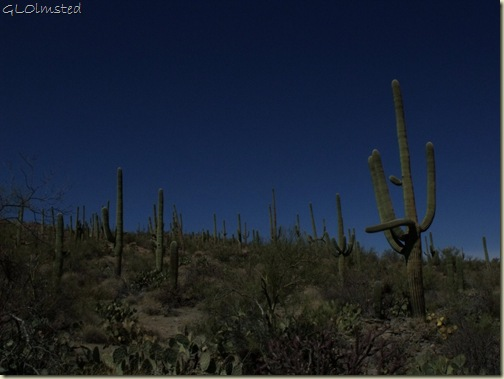 Saguaro National Park Arizona