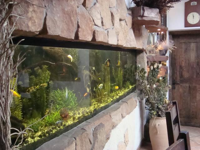 Akwarium słodkowodne w sali bankietowej