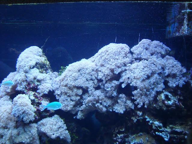 Rafa koralowa - akwarium nr 30