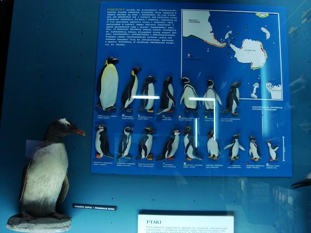 Pingwin pingwinowi nierówny...