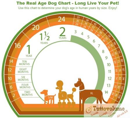 calcolo dell'età di un cane.