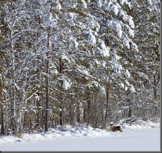 raadyr-i-skog