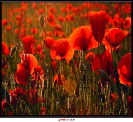 Flores (1021)
