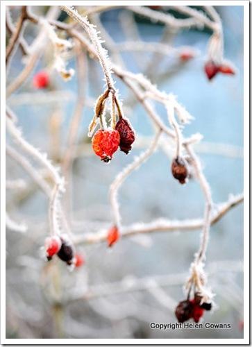 Frost Dec08-6