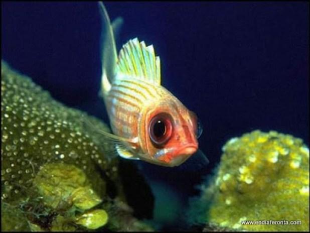 fish-faces22.jpg