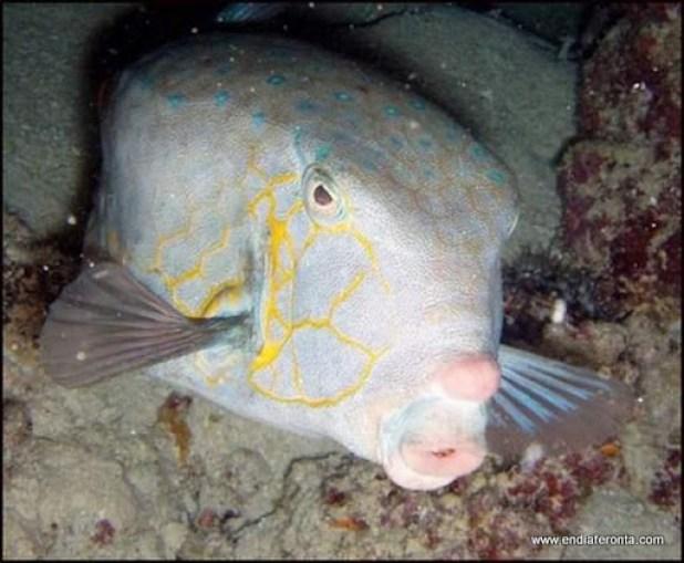 fish-faces26.jpg