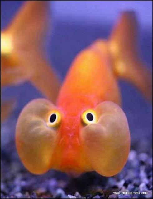 fish-faces27.jpg
