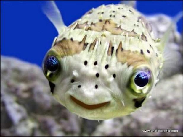 fish-faces05.jpg