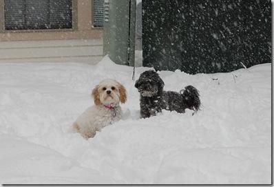 Snow 184