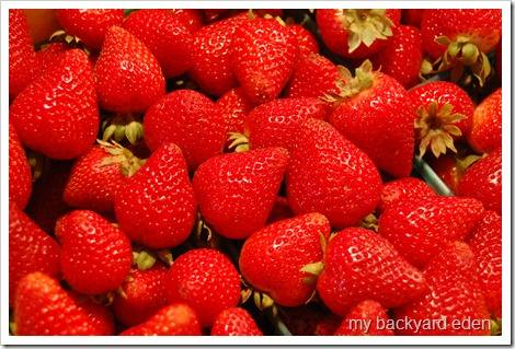Yummy Local Strawberries!
