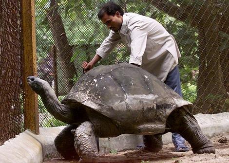 gal_super_tortoise