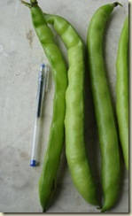 broad beans_1_1_1