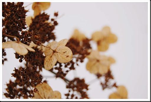 winter hydrangea branch