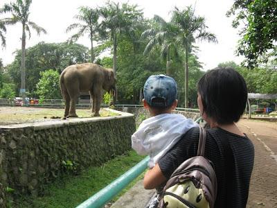 gajah yang besar sekali