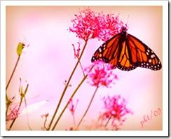 DSC_0025butterfly