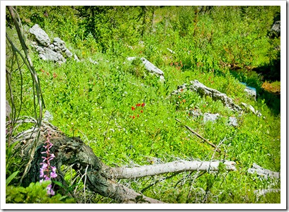 DSC_0142-meadow-log