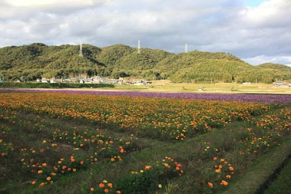 kosumosu05