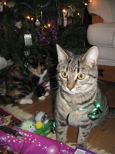 Happy Catmas!