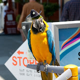 There was parrots at the Union Street Festival that could do very cool tricks by throwing coins up in the air onto their back and then catching it in their beaks!