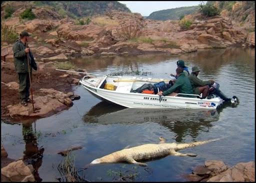 WaterPollutionCrocodilesDyingOlifantsriverKrugerPark_near_Mozambique