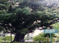 bitaog tree, magallanes, agusan del norte