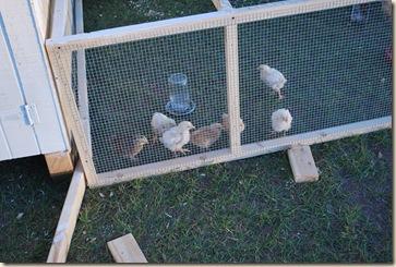 farm life fall 2010 005